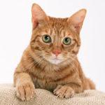 武蔵浦和の犬猫動物病院なら【クッキーペットクリニック】 | クッキー動物病院