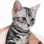 人工股関節外来|人工股関節全置換術(THR)|動物病院|埼玉