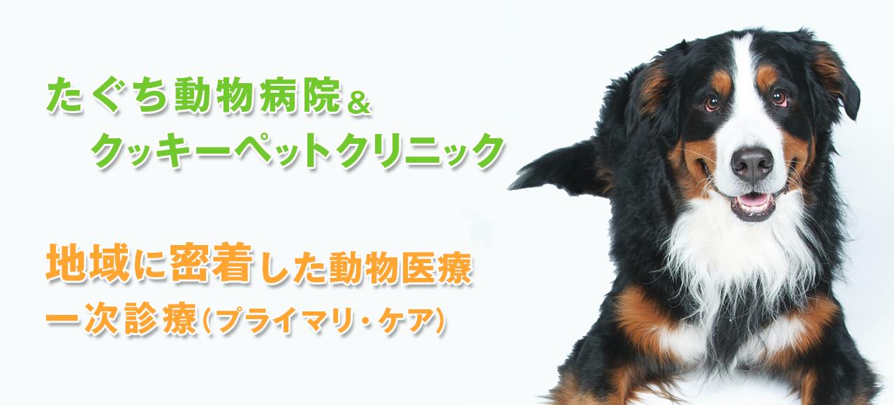 たぐち動物病院グループ|犬猫の高度専門外来|外科、整形外科、腫瘍科、眼科、皮膚科、放射線治療科、人工股関節外来/人工股関節全置換術(THA)|夜間救急診療対応20:00〜22:00(要事前連絡)