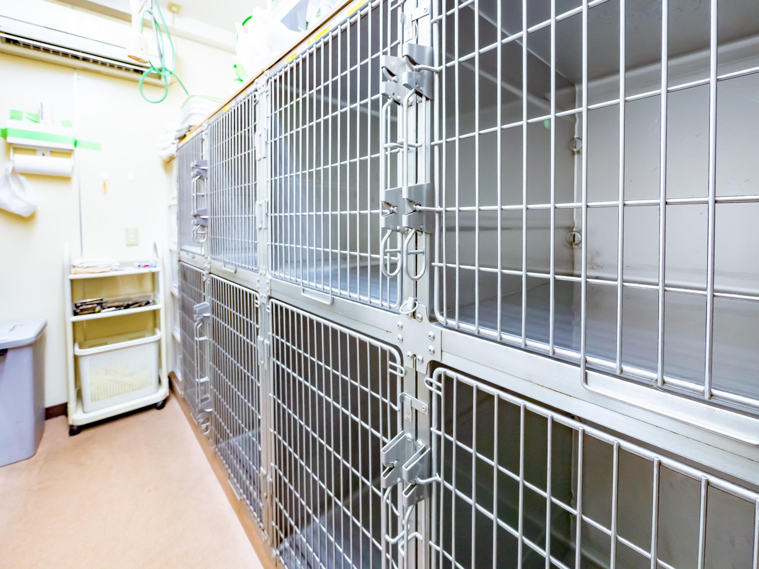 ペットホテル|埼玉県さいたま市南区:武蔵浦和の動物病院なら【クッキーペットクリニック】 | クッキー動物病院